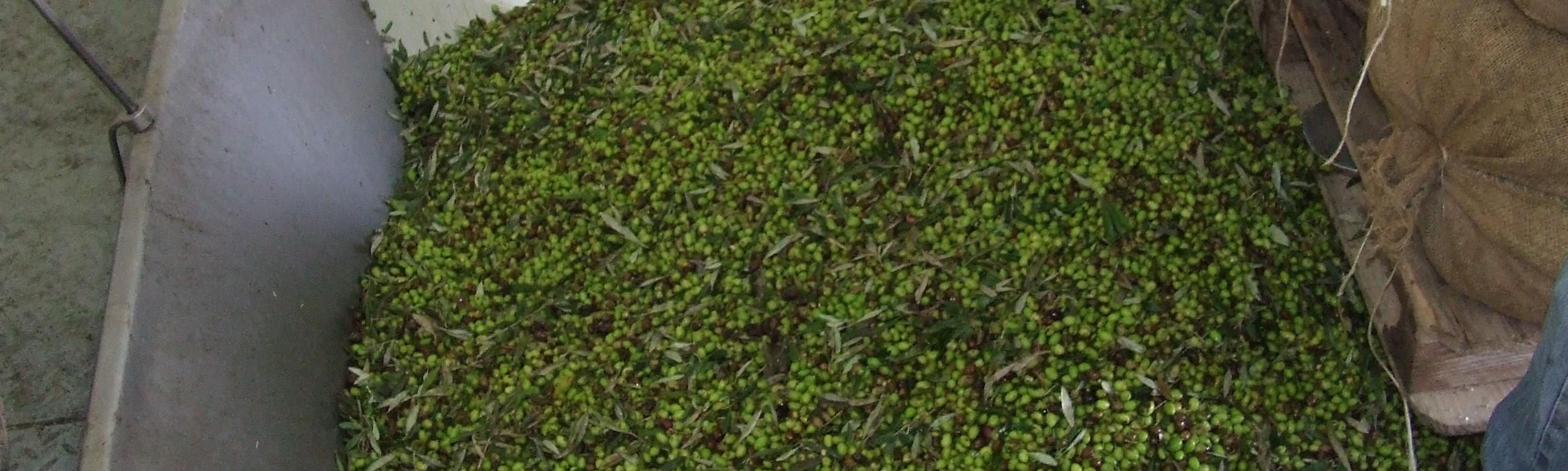 Verwerking olijven